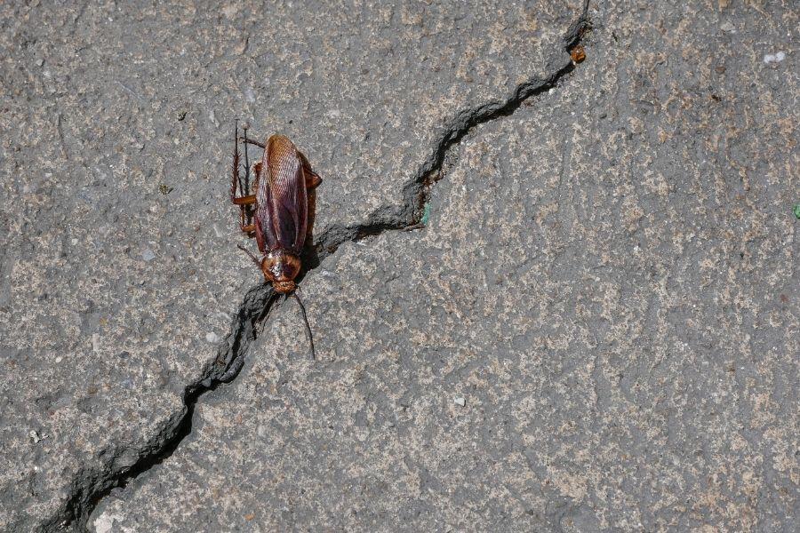 Single dead roach