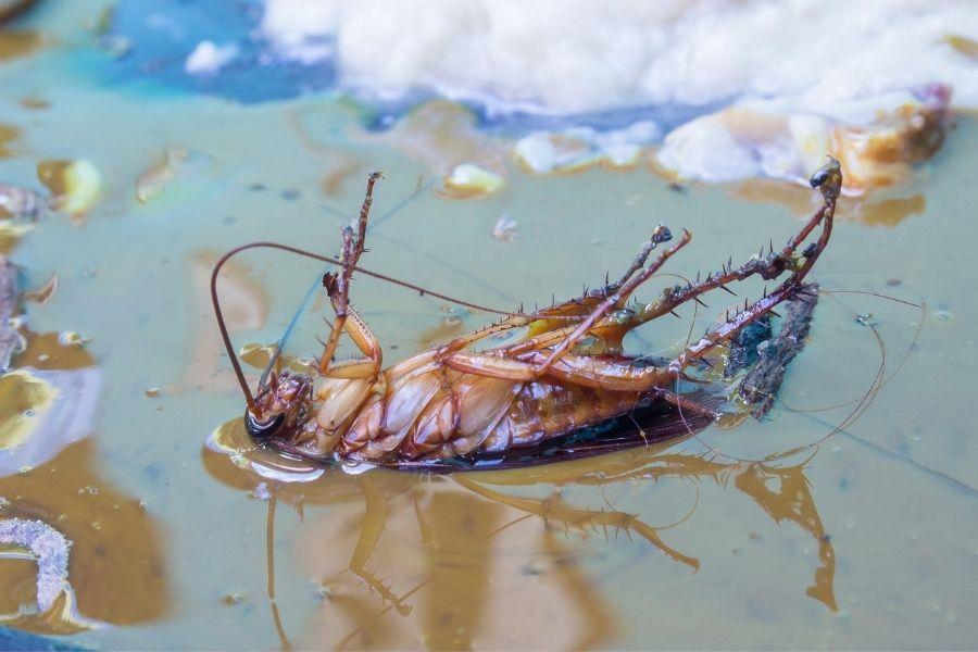 Dead roach on its back